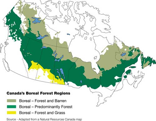 Canada Virgin Forest Map Boreal Forest